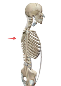 背骨のかたち