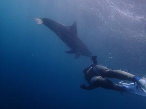 イルカとわたし