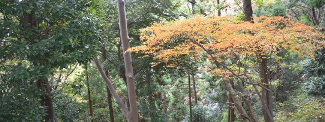 飯山の紅葉