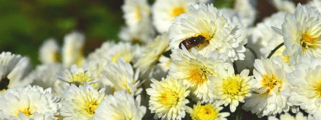 飯山花の里ミツバチ