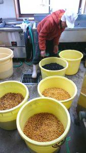 水口農場・無農薬・在来種大豆