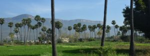 インドの田園風景