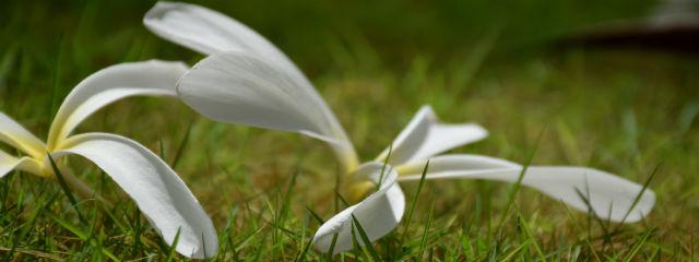 地面に落ちた花
